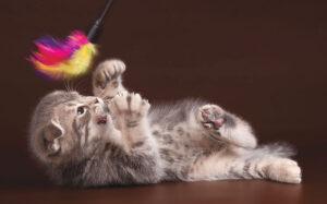 Большинство игрушек из перьев сделаны с длинной пластиковой палочкой с игрушкой из перьев на конце, чтобы вы могли шевелить ею и привлекать внимание вашей кошки