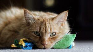 Прежде чем торопиться купить милого котенка, потратьте время, чтобы сделать свою домашнюю работу во избежание тех ошибок, включая неправильное содержание кошек, которые часто делают первые новые владельцы кошек