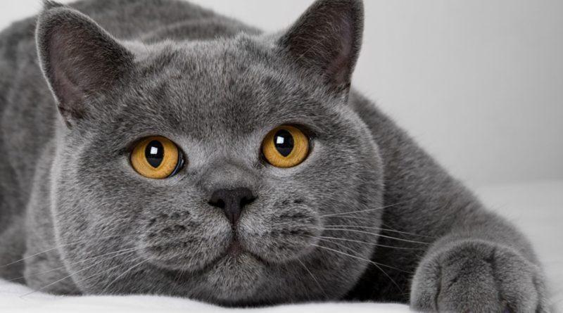 Точно так же как мы должны быть очень осторожны в выборе и употреблении продуктов питания для себя, так и кошки должны правильно питаться. Исследуйте ваш выбор продуктов питания тщательно