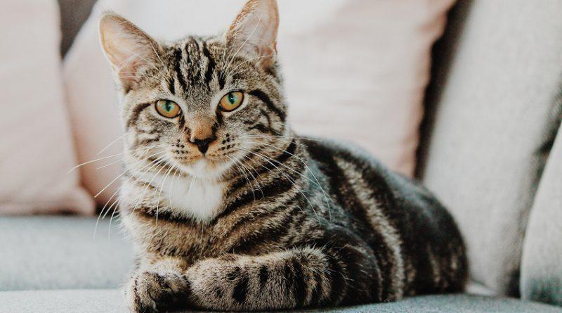 Можно обогатить повседневную жизнь домашней кошки, заменить условия содержания и получить свободомыслящее животное. Это обогащение среды создает сложности и дает кошке право выбора в ее повседневной жизни