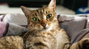 После того, как имя будет выбрано, произнесите его вслух, чтобы убедиться, что вы не будете слишком смущены, когда оно будет произнесено публично, например, когда будете звать кошку с улицы