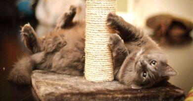 5 игрушек, которые заставят вашу кошку забыть о своей естественной потребности когтиться. Когтеточки – очень популярный вид игрушек, но вас могут раздражать нитки, которые вам приходится убирать