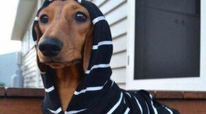 В зимнюю стужу не следует забывать и о шапочках для собаки. Особенно красиво будут смотреться комплекты: шапочка и пальто, шапочка и комбинезон. Для собак среднего размера хорошо подойдет комплект одежды спортивного стиля.