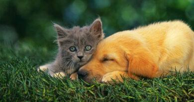 Заражение блохами является распространенной проблемой кожи у кошек и собак. Чтобы решить эти проблемы, владельцы домашних животных часто используют специальные продукты.