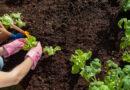 Руководство для начинающих огородников