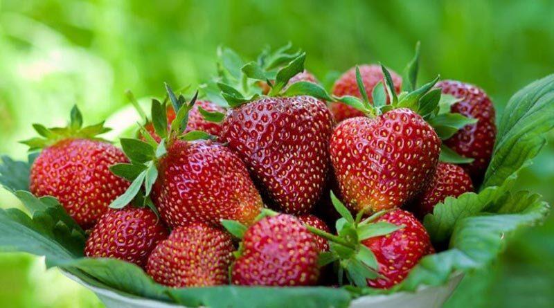 В то время как клубника по-прежнему будет продолжать краснеть после того, как вы заберете ее домой, при покупке этих ягод по-прежнему важно, чтобы они имели красивый темно-красный цвет